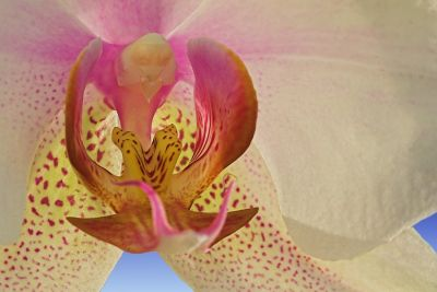 Orchidee - Close Up
