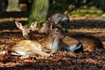 Die drei aus dem Wald